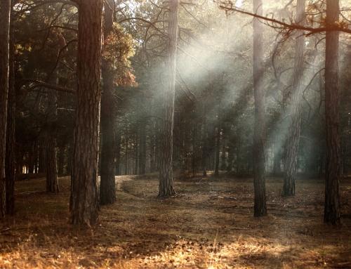 Shining the Light – Mark 5