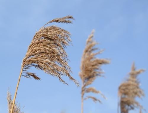 Hosea 12:1 – Feeding On Wind