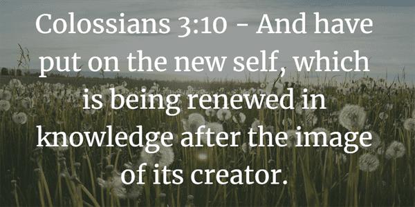 Colossians 3:10 Bible Verse