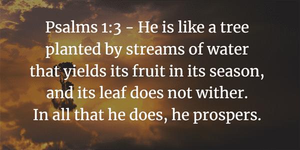 Psalm 1:3 Bible Verse